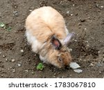 Rabbit. it is a small...