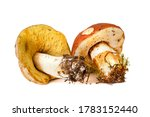 Two Porcini Mushrooms With...