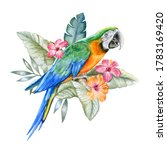 Harlequin Macaw  Parrot In...