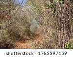 Small photo of Trail with dry vegetation and trees in the midst of drought.