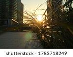 Sunset Through The Building An...