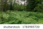Ferns Is A Flowerless Plant...