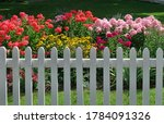 Colorful Summer Flowers Behind...