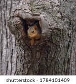 Old Tree Trunk Squirrels House. ...