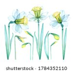 set of daffodils transparent... | Shutterstock . vector #1784352110