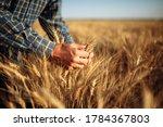 Man Farmer Checking The Quality ...