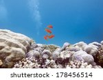 coral reef with hard corals and ... | Shutterstock . vector #178456514