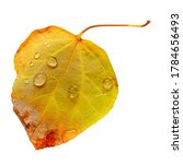 Single Autumn Leaf With...