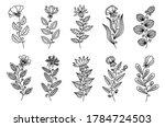 vector decorative black line...   Shutterstock .eps vector #1784724503