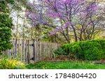 Idyllic Garden In Virginia Wit...