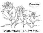 Carnation Flower And Leaf Hand...