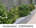 Green plants in a granite flower bed against the background of a wall lined with gray-green tiles - stock photo