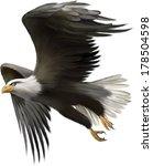 alaska,america,american,animal,bald,beak,bird,brown,claws,creature,cut,drawing,eagle,endangered,falconry