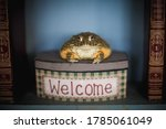 The Wise African Bullfrog In...