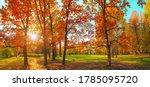 Autumn Forest Landscape. Gold...