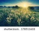 vintage picture. magic sunrise... | Shutterstock . vector #178511633