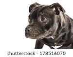 staffordshire bull terrier... | Shutterstock . vector #178516070