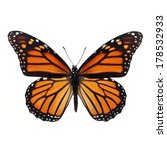 Stock photo monarch butterfly with marking reddish orange black on a wing isolated on white background 178532933