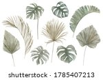 set of exotic tropical palm ... | Shutterstock . vector #1785407213