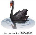 creo que,aves,domesticado,ganso,imagen,científicos,verdadero,aves acuáticas