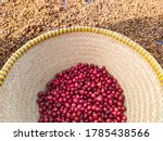 Fresh Robusta Coffee In The...