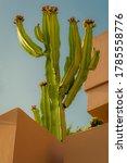 Blooming Cactus In Orange...