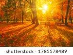 Autumn Forest Path. Orange...