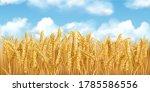 3d realistic vector gold wheat... | Shutterstock .eps vector #1785586556