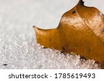 Dead Leaf In Snow. Close Up...
