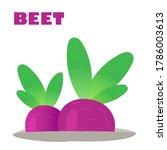 juicy beet grows in the garden. ...   Shutterstock .eps vector #1786003613