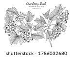 american cranberrybush fruit... | Shutterstock .eps vector #1786032680