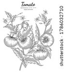 tomato hand drawn botanical... | Shutterstock .eps vector #1786032710