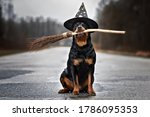 Funny Rottweiler Dog In A...