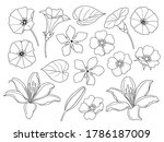 contoured simple lily  bindweed ... | Shutterstock .eps vector #1786187009