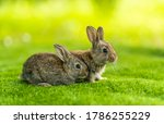 Rabbits. Cute Little Easter...