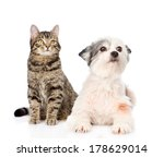 Stock photo cat and dog together isolated on white background 178629014