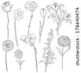 art,birthday,black,botanic,bouquet,bud,camomile,carnation,celebrate,chamomel,chrysanthemum,contour,daffodil,daisy,date