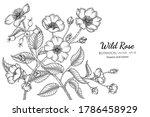 wild rose flower and leaf hand...   Shutterstock .eps vector #1786458929