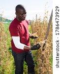 African American Horticulturis...