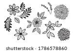 Big Set Of Botanical Sketches...
