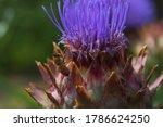 A Closeup Shot Of A Honeybee A...