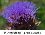 A Macro Shot Of A Honeybee As...