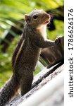Ground Squirrels Eat Nuts ...