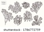 Corals And Seaweed. Vector Hand ...
