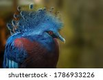 The Victoria Crowned Pigeon Is...