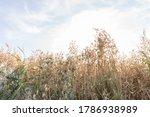 dry grass field in the sunlight ... | Shutterstock . vector #1786938989