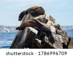 Sea Lions Basking In The Sun...