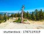 Trees Of Sentinel Dome Summit...