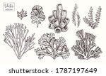 corals and seaweed. vector hand ... | Shutterstock .eps vector #1787197649