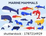 sea mammals animal collection... | Shutterstock .eps vector #1787214929